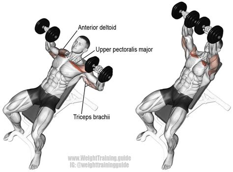 incline bench press muscles worked 25 best ideas about bench press on pinterest bench