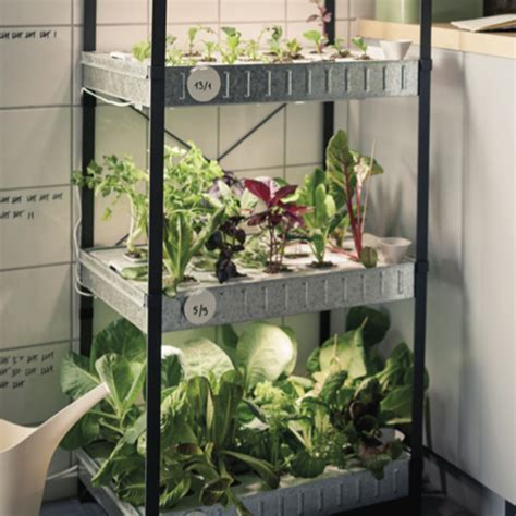 ikea indoor garden ikea launches hydroponic indoor gardening kit