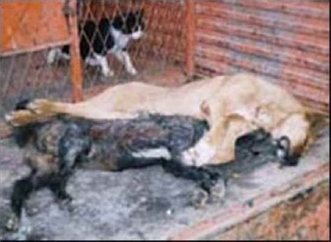 muslims dogs spain muslims carry out jihad on dogs