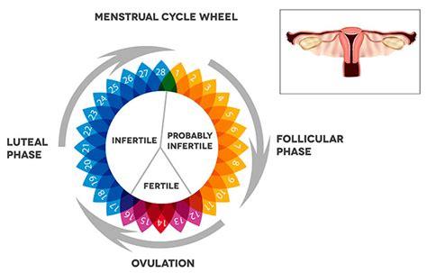 Calendarios De Ovulacion Calendario De Fertilidad Para Quedar Embarazada
