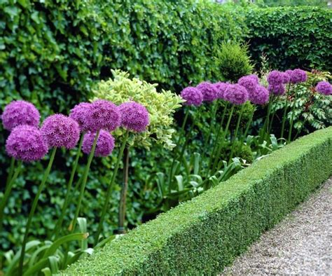 Home Decor Subscription Box by Giant Allium Giganteum Beautiful Flower Seeds Garden Plant