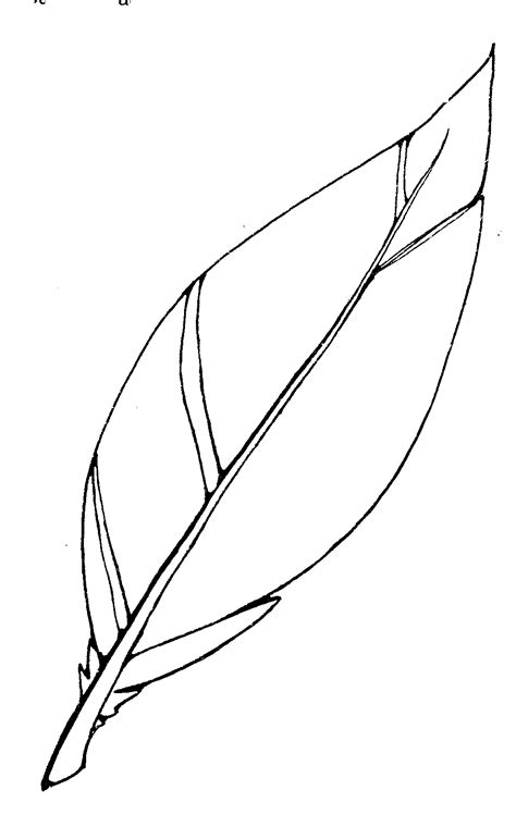 eagle feather coloring page mormon share feather