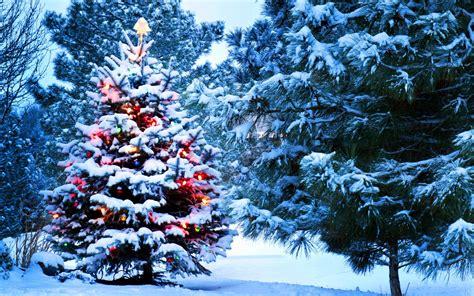 christmas snow new year tree lights wallpaper