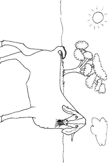 boer goat coloring pages nubian goat coloring pages www imgkid com the image