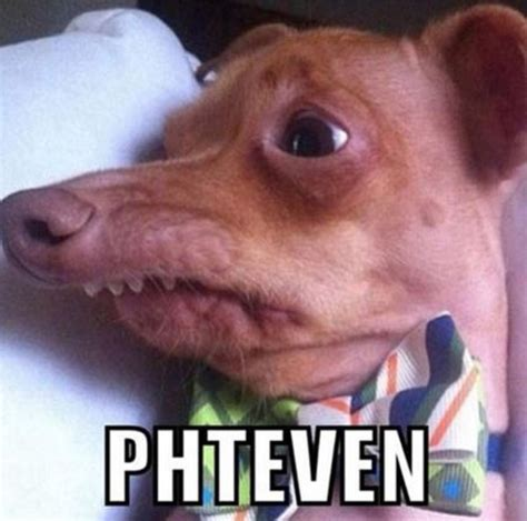 Phteven Meme - phteven tuna the dog know your meme