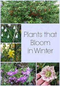 the 25 best winter garden ideas on fall