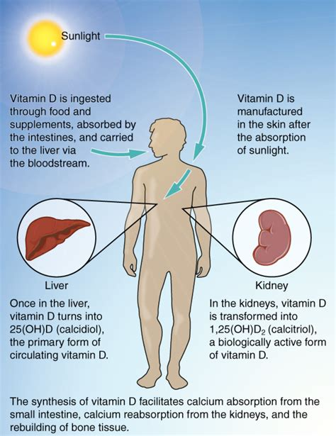 B12 Detox Symptoms by Vitamin D May Help Protect Against Cancer Study