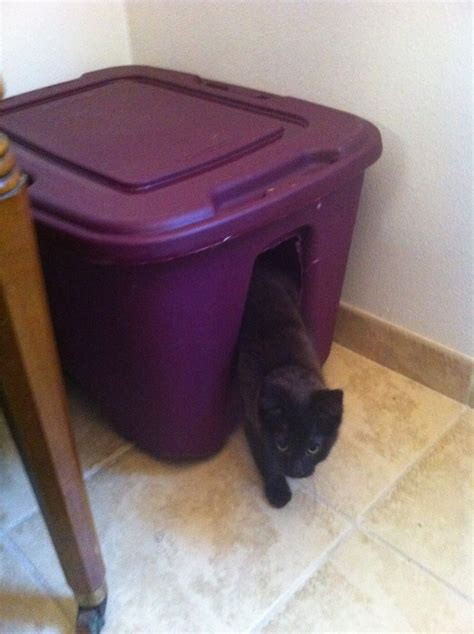 cat litter box storage ottoman 17 best images about for my cats on pinterest cat litter