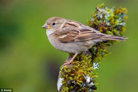 Neonicotinoids Pesticide Neonicotinoids Linkied To Songbird Decline