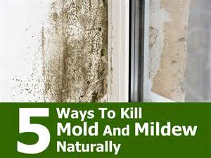 How To Clean Upholstery With Baking Soda How To Instantly Treat Household Mold And Mildew Naturally