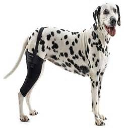 dogs brace rehab knee protector back animals leg