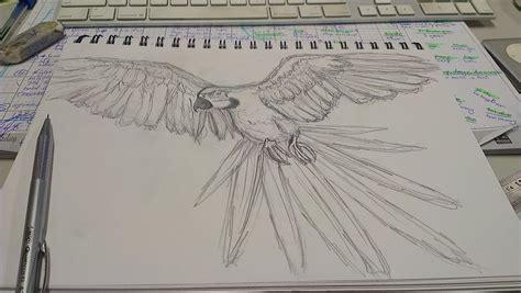 sketchbook speed drawing macaw speed sketch practice by pkldesigner on deviantart