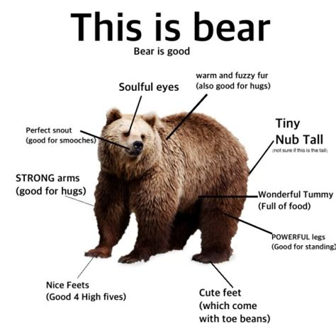 Meme Bear - bears tumblr