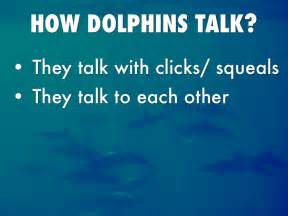 dolphin talk how we can talk with dolphins in 5 easy steps age books what do dolphins eat they eat fish by p209