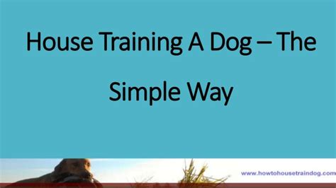 house training a dog house training a dog the simple way