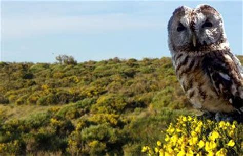 imagenes de naturaleza varias natursierra te propone varias rutas guiadas gratuitas para