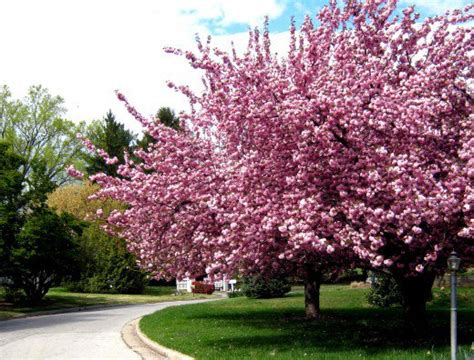 best small trees for landscaping front yard