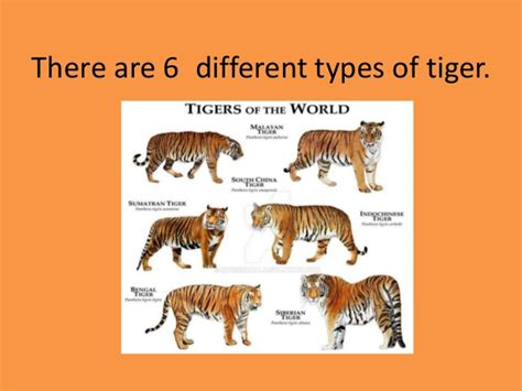 what are the different types of tigers living tiger research task