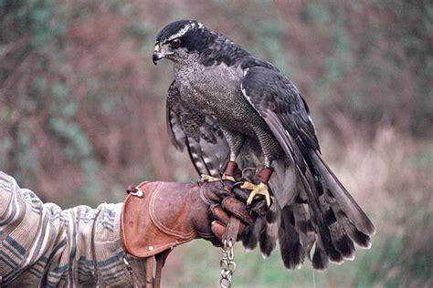 bird talk questions and answers canadian snowbird bird fee check out bird fee cntravel