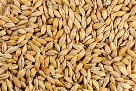 whole grains difficult to digest and types of feed