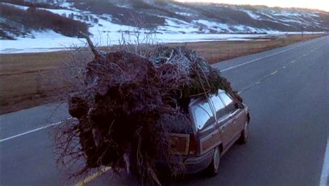 police stop car carrying massive christmas tree home
