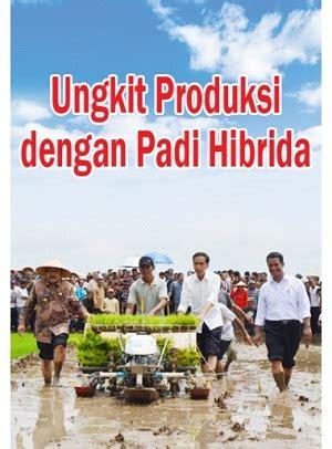 Bibit Padi Hibrida benih padi hibrida mapan p 05 di tanjung balai kios