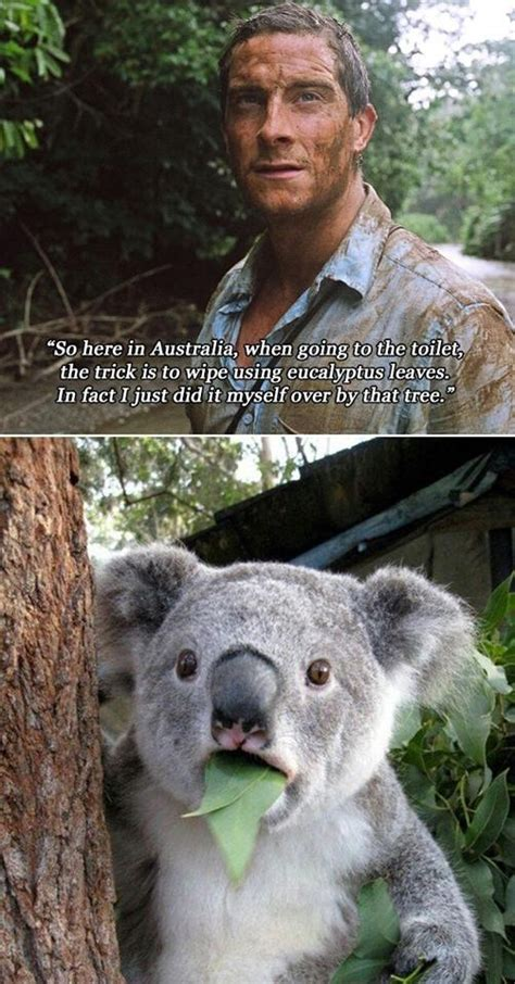 Bear Grylls Memes - bear gryll funny meme pictures to pin on pinterest pinsdaddy