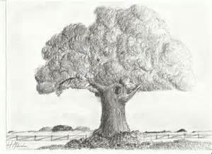 tree sketch by zephyrmidwinter on deviantart