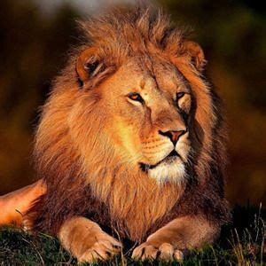 horoscopo leo 1000 images about astrologia astrology signos zodiaco