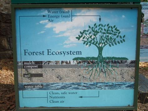the golden forest exploring a coastal california ecosystem term ecological research books forest ecosystem simplified education