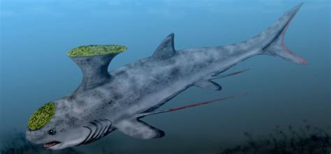 extinct breeds 10 amazing extinct species of shark dawdlez