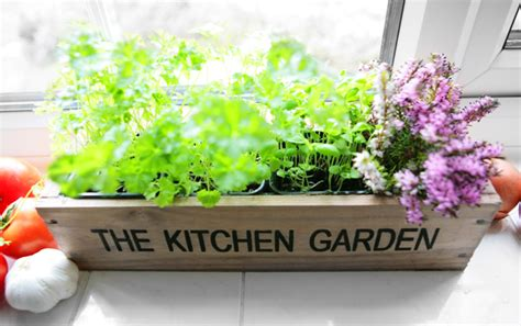 kitchen herb pots wooden planter window sill garden plant kitchen herb garden windowsill planter with seeds and