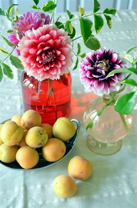 how to care for dahlias in winter 28 images tips