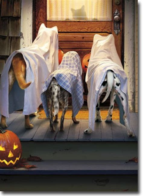 Trick Or Treat 3 3 dogs trick or treating card greeting