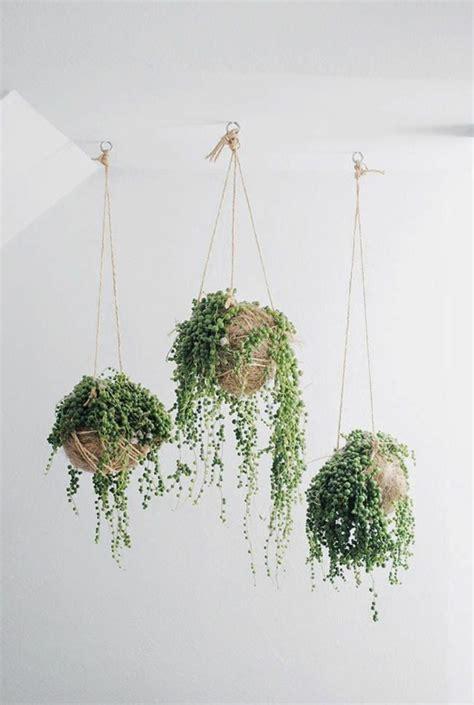 hängende pflanzen h 228 ngende zimmerpflanzen bilder anreizenden blumeneln