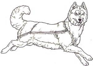 coloring pictures of huskies husky coloring sheets coloring pages husky coloring