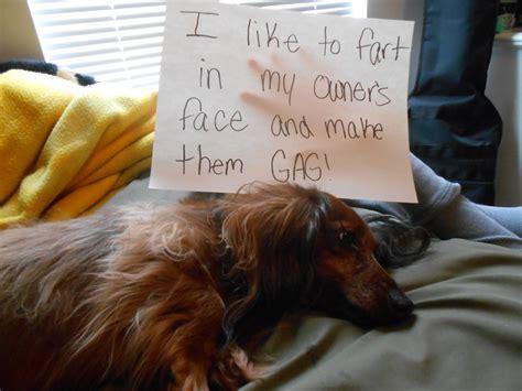 stinky puppy stinky