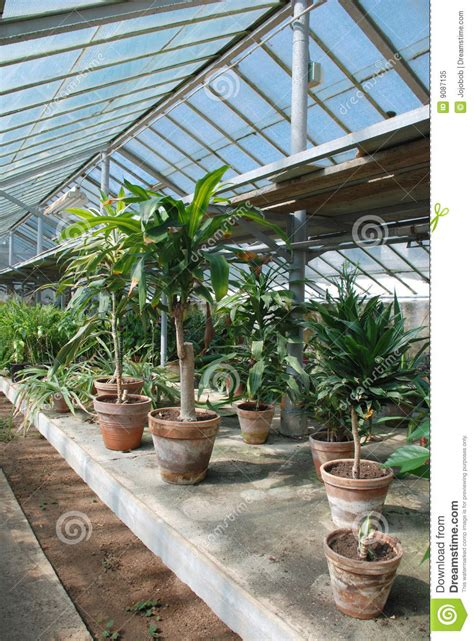 hot house row of hot house plants royalty free stock photo image 9087135