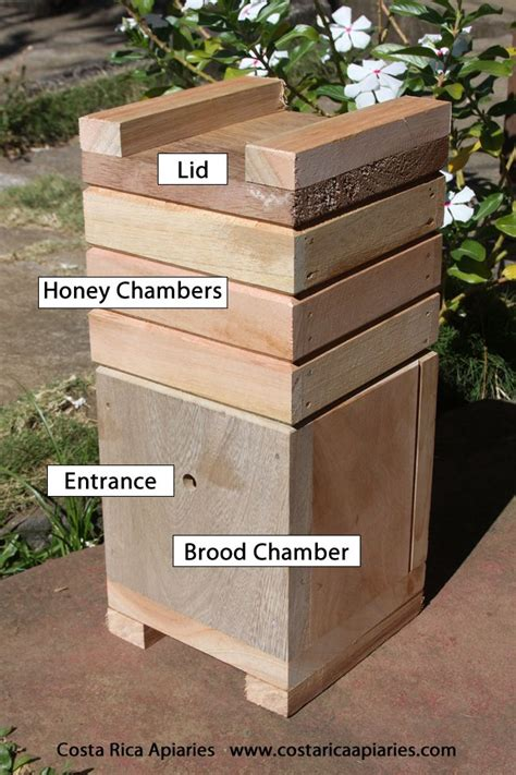 sting  bee hive bee keeping stingless bees bee feeder