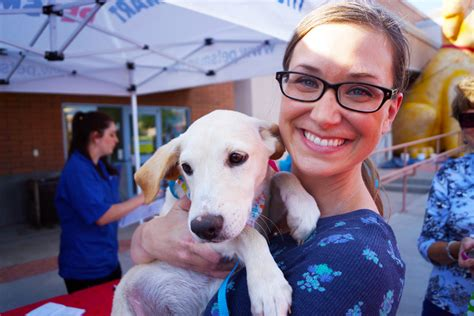 san antonio adoption san antonio 1 in pet adoptions during national adoption weekend animals matter