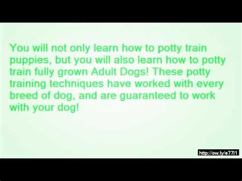 how to train dog to not pee in house how to train your dog not to pee and poop in the house youtube