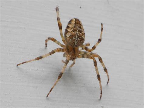 Garden Spider Illinois My Chicago Botanic Garden Tag Archive Spiders