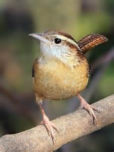 why birds audubon pennsylvania