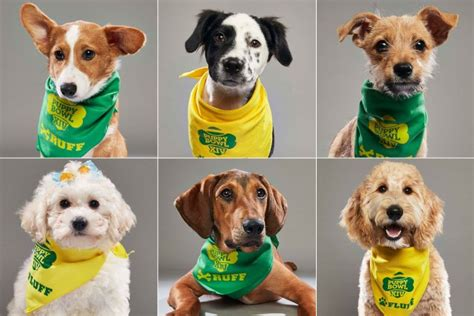 puppy bowl lineup puppy bowl is back meet team fluff and team ruff pet worth