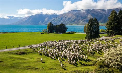 Can I Work In New Zealand With A Criminal Record 2016 New Zealand Working Visa Application For Nationals Iibt