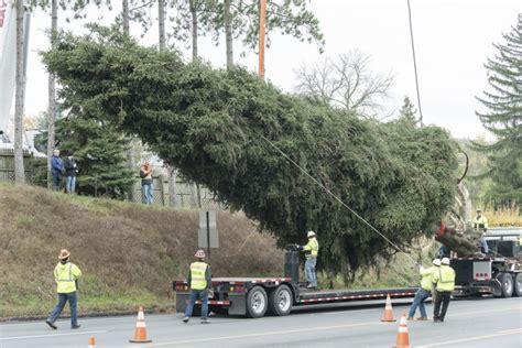 pennsylvania tree to adorn rockefeller center for
