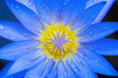 blue yellow petaled flower  stock photo