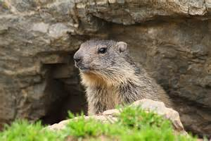 beethoven the beethoven the marmot the m 233 lisande chorale