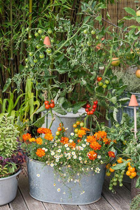 cottage garden pots a cottage garden in pots