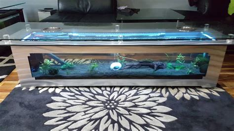 fish table tips tips to build aquarium coffee table interior decorating